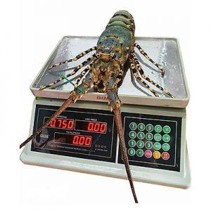 Cân tính tiền điện tử chống nước, cân điện tử QU 832, Cân điện tử tính tiền chống nước.