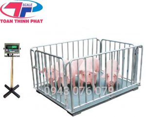 Cân Gia Súc- Động Vật Sống- Cân Lợn-Cân Heo Điện Tử